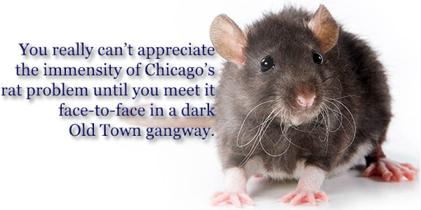 You really can't appreciate the immensity of Chicago's rat problem until you meet it face-to-face in a dark Old Town gangway.